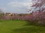 Blütenpracht im Steinbruch Darmsheim