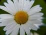 Blumenexperimente