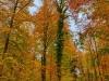 P1060383_4_5_easyHDR-vivid-colors