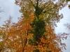 P1060386_7_8_easyHDR-vivid-colors