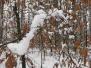 Winter_Gallerie